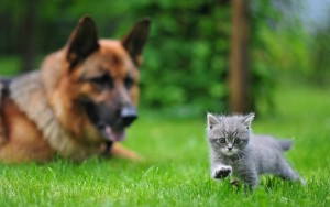 dog-cat-blurring-grass-walk-1440x900